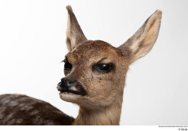 Head Deer Animal photo references