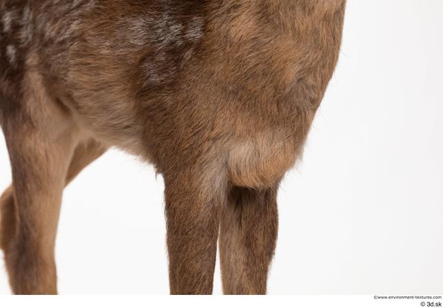 Chest Leg Deer Animal photo references
