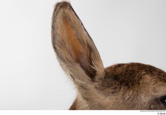 Ear Deer Animal photo references