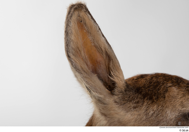 Ear Deer Animal photo references