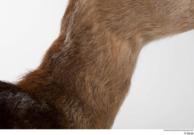 Neck Deer Animal photo references