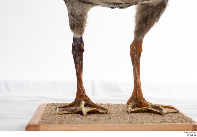 Leg Goose Bird Animal photo references