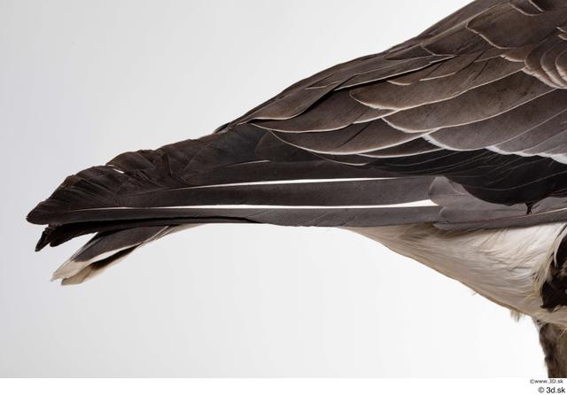 Tail Goose Bird Animal photo references