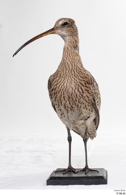 Whole Body Bird Animal photo references