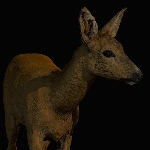 Deer 3D Scans