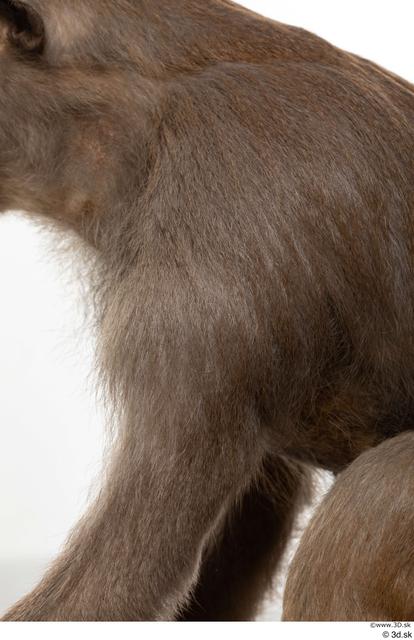 Arm Monkey Animal photo references