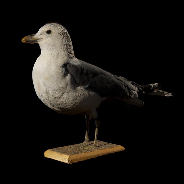 Bird 3D Scans