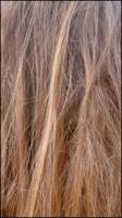 Hairs II