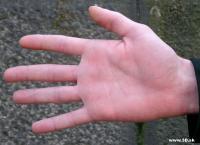 Hand Photo 013