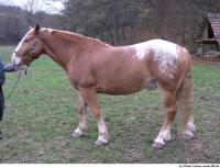 Horse 0004