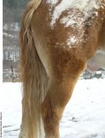 Horse 0025