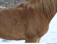 Horse 0029