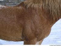 Horse 0033