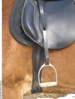 Horse 0123