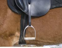 Horse 0124