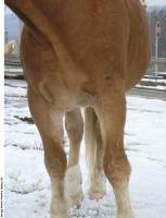 Horse 0145