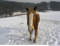 Horse poses 0015