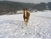Horse poses 0017