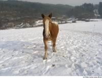 Horse poses 0018