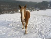 Horse poses 0019
