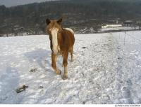 Horse poses 0027