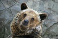 Bear 0001