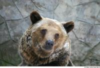 Bear 0002
