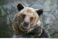 Bear 0003