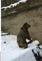 Bear 0005