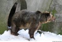 Bear 0007