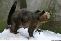 Bear 0009
