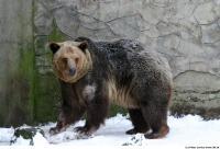 Bear 0010