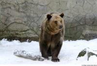 Bear 0013
