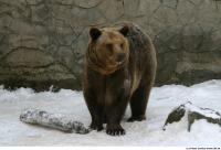 Bear 0014