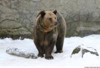 Bear 0015
