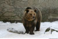 Bear 0016