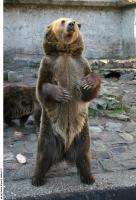 Bear 0017
