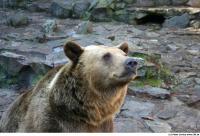 Bear 0018
