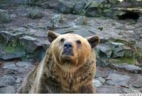 Bear 0019
