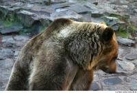 Bear 0020