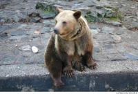 Bear 0021