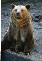 Bear 0023