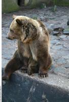 Bear 0024