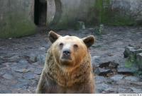 Bear 0025