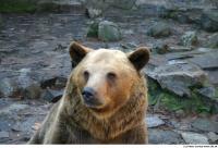 Bear 0026