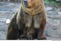 Bear 0027