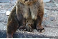 Bear 0028