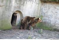 Bear 0029