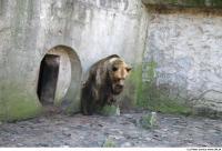 Bear 0030