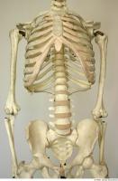Skeleton 0018